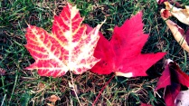 Automne - Good Morning Montreal